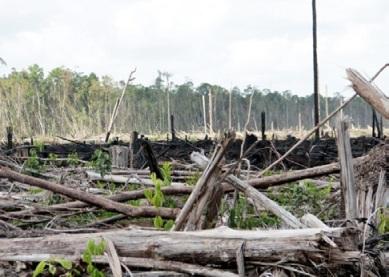Jaga Kelestarian Hutan di Papua