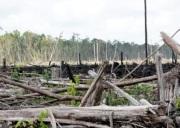 hms-kerusakan hutans